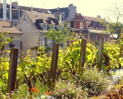 Paris Montmartre Vignes Clos Montmartre